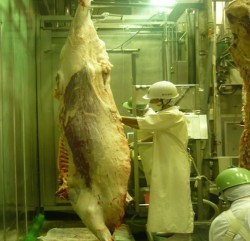 Meat Safety Inspection